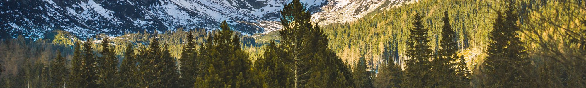 Trees in front of Mountain